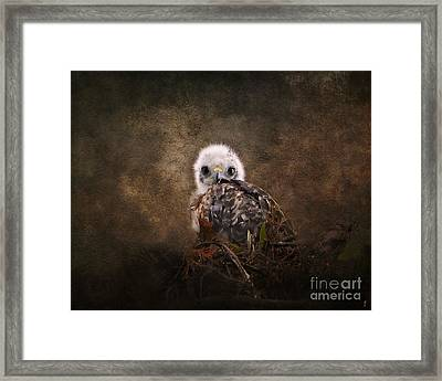 Nestling Framed Print by Jai Johnson