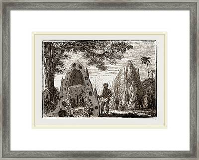 Nests Of Termites Framed Print by Litz Collection