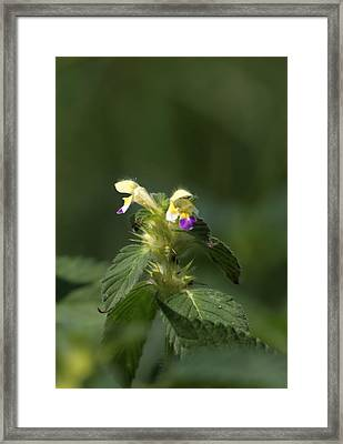 Framed Print featuring the photograph Nettle by Leif Sohlman