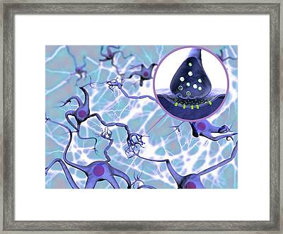 Neural Network And Synapse Framed Print