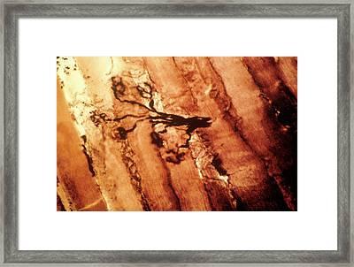 Neuromuscular Junction Framed Print