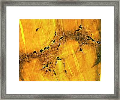 Neurons Framed Print