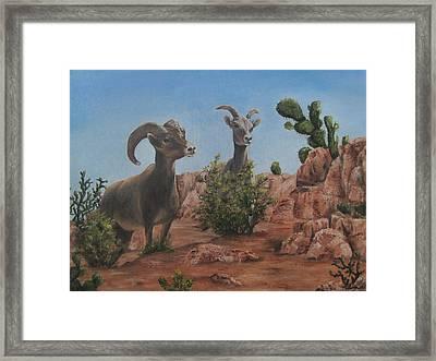 Nevada Big Horns Framed Print