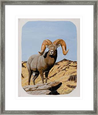 Nevada California Bighorn Framed Print