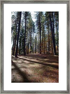 Nevada County Fair Framed Print