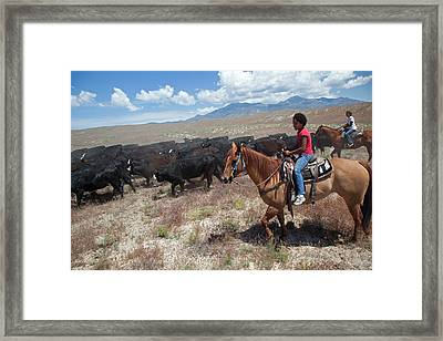 Nevada Cowgirls Herding Cattle Framed Print by Jim West