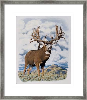 Faria Nevada Nontypical Mule Deer Framed Print