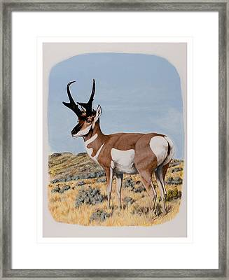 Nevada Pronghorn  Framed Print