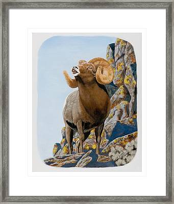 Nevada Rocky Mountain Bighorn Framed Print