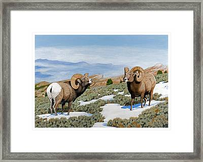 Nevada Rocky Mountain Bighorns Framed Print