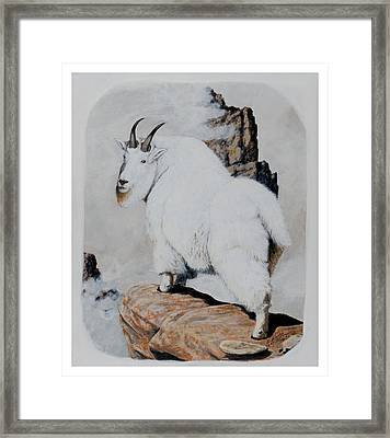 Nevada Rocky Mountain Goat Framed Print