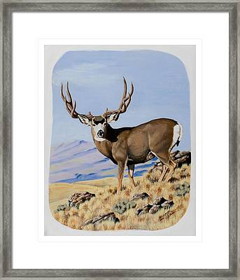 Nevada Typical Mule Deer Framed Print