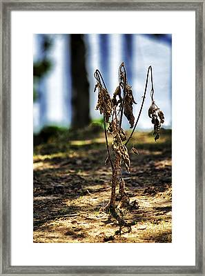 Never Stood A Chance Framed Print by Jason Politte