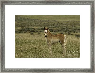New At Mccullough Peaks Framed Print by Bob Dowling