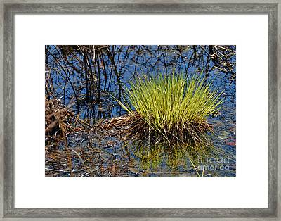 New Beginning Framed Print
