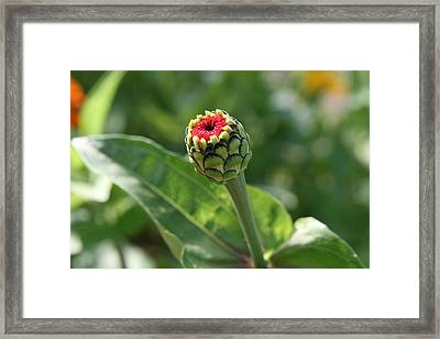 Framed Print featuring the photograph New Beginning by Neal Eslinger