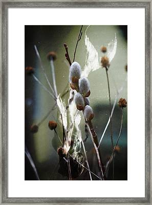 New Beginnings And Fairytales Framed Print by Rebecca Sherman
