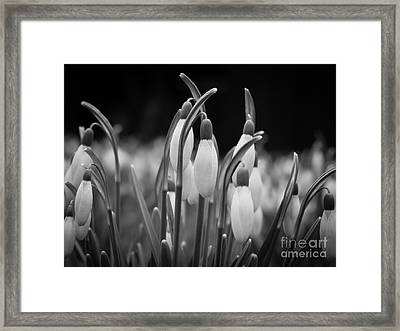 New Beginnings And Hope Framed Print by Inez Wijker Photography