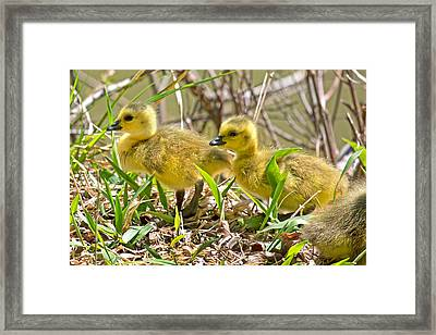 New Beginnings Framed Print by Betsy Knapp
