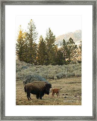 New Beginnings Framed Print by Birches Photography