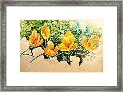 New Beginnings Framed Print by Carolyn Rosenberger