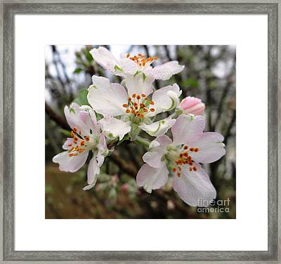 Framed Print featuring the photograph New Beginnings by Ecinja Art Works