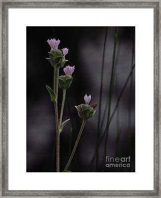 New Beginnings Framed Print by Joy Hardee