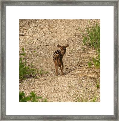 Framed Print featuring the photograph New Born Mule Deer by Daniel Hebard