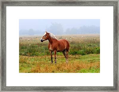 New Brunswick Horse Framed Print