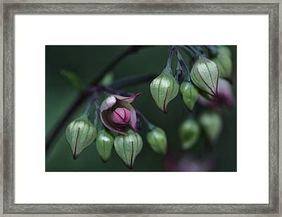 New Bud Framed Print