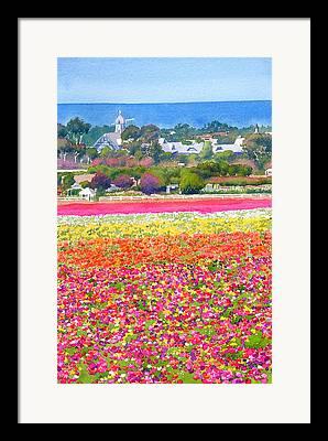 Ranunculus Framed Prints