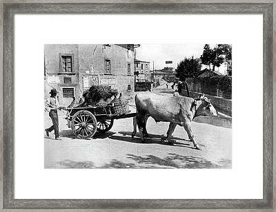 New Chianti Wine Framed Print by Underwood Archives