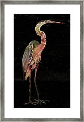 New Coat For The Heron Framed Print by Carol Kinkead