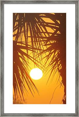 New Day In Paridise 2 Framed Print by Will Boutin Photos