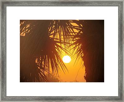 New Day In Paridise Framed Print by Will Boutin Photos