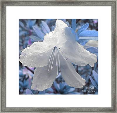 Framed Print featuring the photograph New Dew by Janice Westerberg
