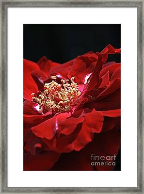 Framed Print featuring the photograph New Dream by Joy Watson