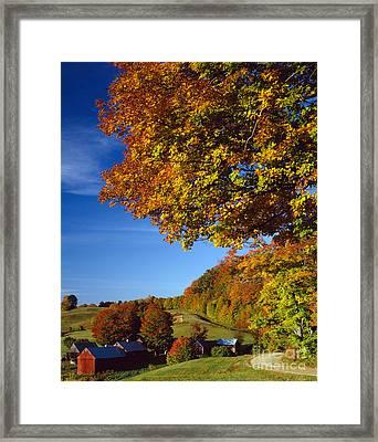 New England Autumn Framed Print by Rafael Macia