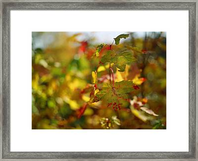 New England Fall On Film Framed Print by Linda Unger