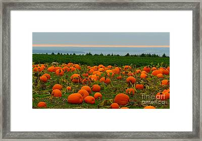 New England Pumpkin Patch Framed Print by Eclectic Captures