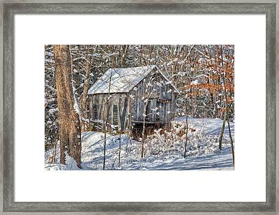 New England Winter Woods Framed Print