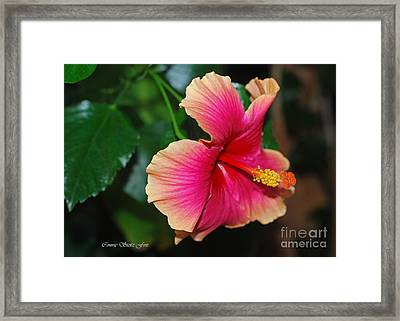 New Every Morning - Hibiscus Framed Print