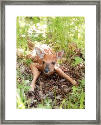 New Fawn In The Forest Framed Print