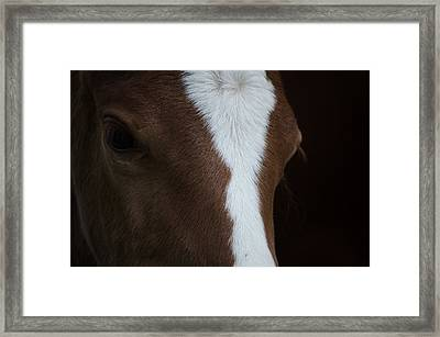 New Filly Framed Print by Kelly Kitchens