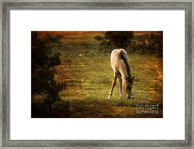 New Forest Framed Print by Angel Ciesniarska