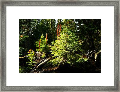 New Forest Framed Print by Jeff Swan