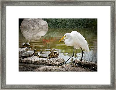 New Found Friends Framed Print