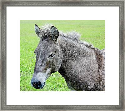 Cute Little Donkey Framed Print