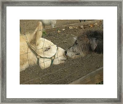 New Friends Framed Print by Susan Elizabeth Dalton