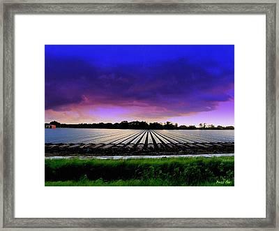 New Ground For Strawberries Framed Print